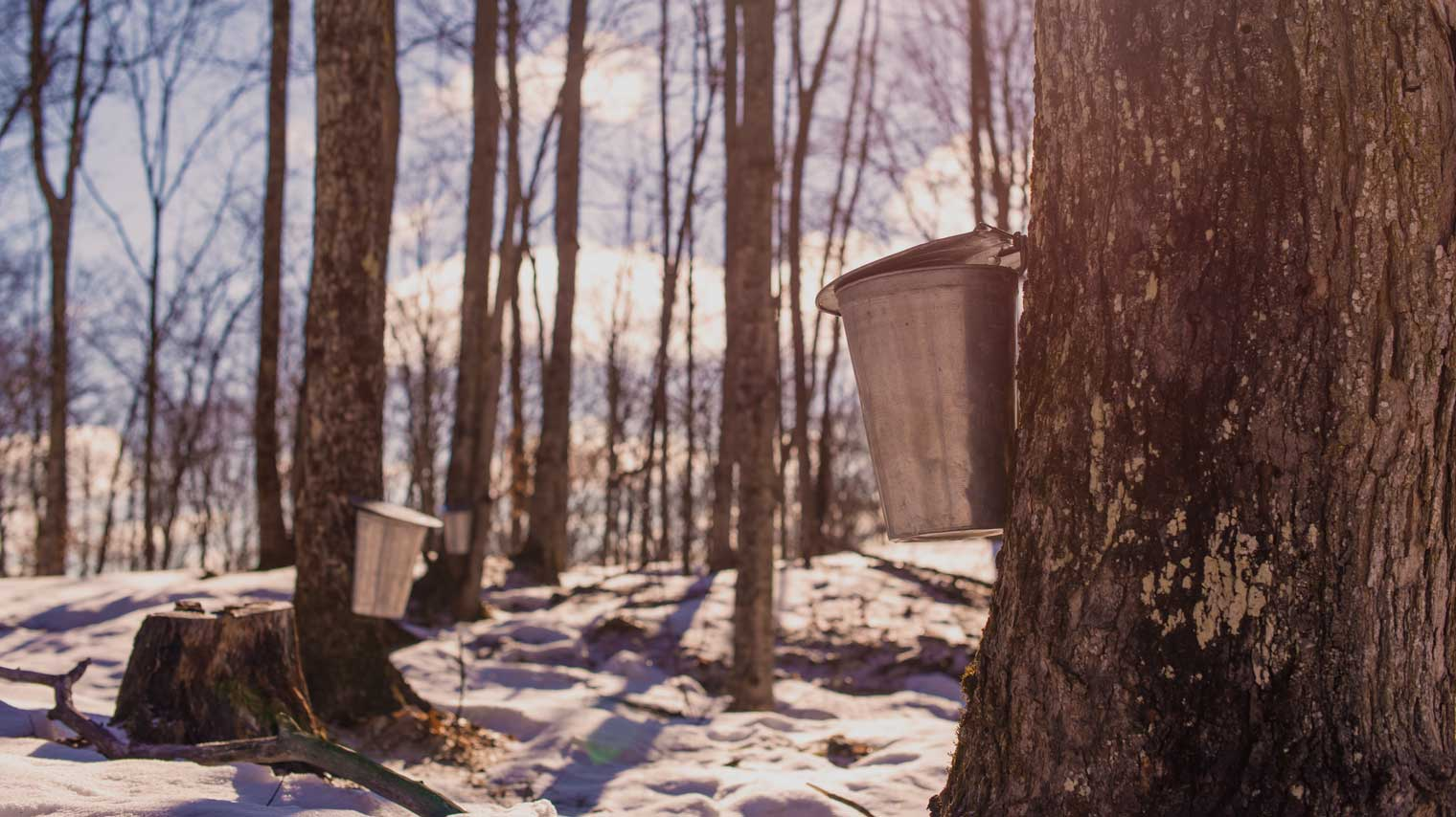 Our 24-hour maple adventure in Muskoka